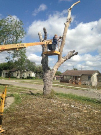 Gina working on big tree out front